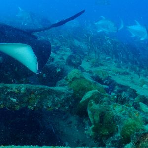 S.S. Yongala dive on 3 Night Liveaboard  Tour