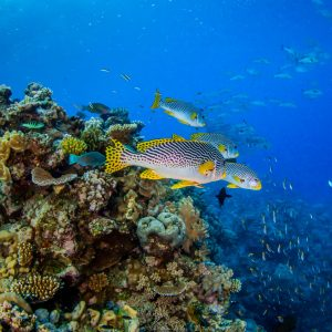 Great Barrier Reef Tours Cairns