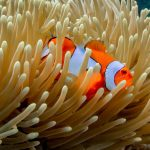 Great Barrier Reef Things to Do
