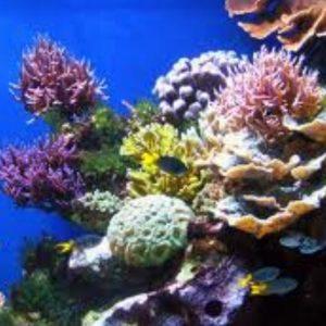 Flynn Reef