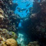 swim throughs Hastings Reef
