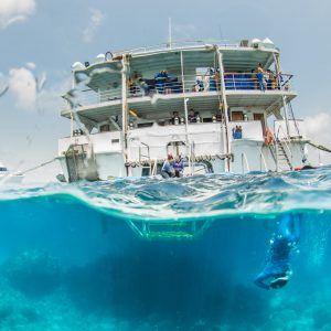 Great Barrier Reef Liveaboard & Rainforest