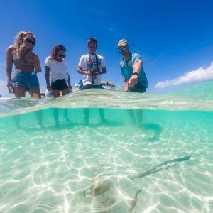 Enjoy the guided Reef and Island naturalist talks
