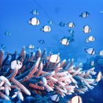 Sail Dive and Snorkel Liveaboard